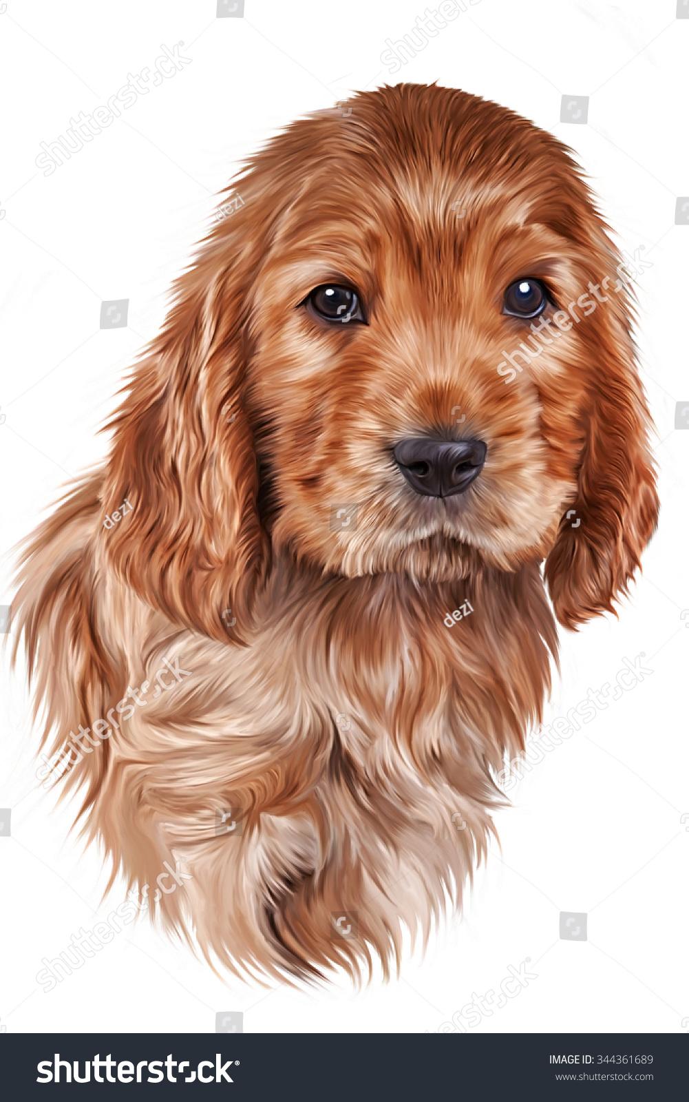 Drawing Dog, Puppy English Cocker Spaniel, Portrait On White Background
