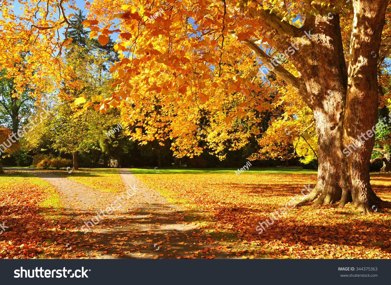 Fall Tree Images For Background