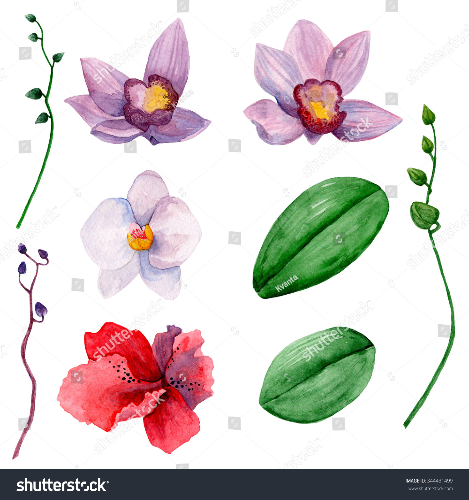 Hawaiian flowers clipart watercolor orchids clip stock illustration hawaiian flowers clipart watercolor orchids clip art izmirmasajfo