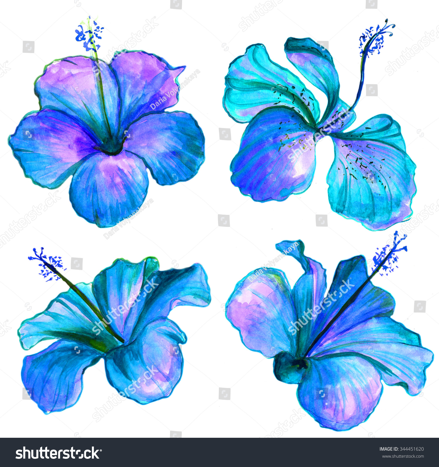 Bright blue watercolor hibiscus flowers collection stock bright blue watercolor hibiscus flowers collection izmirmasajfo