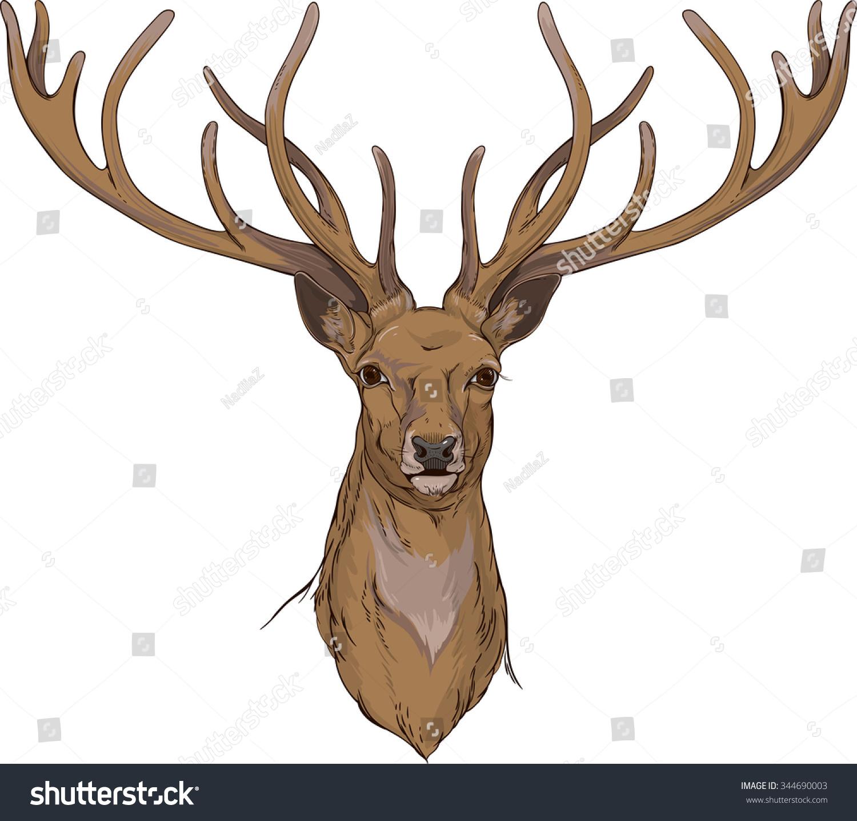 Real reindeer antlers side view - photo#5