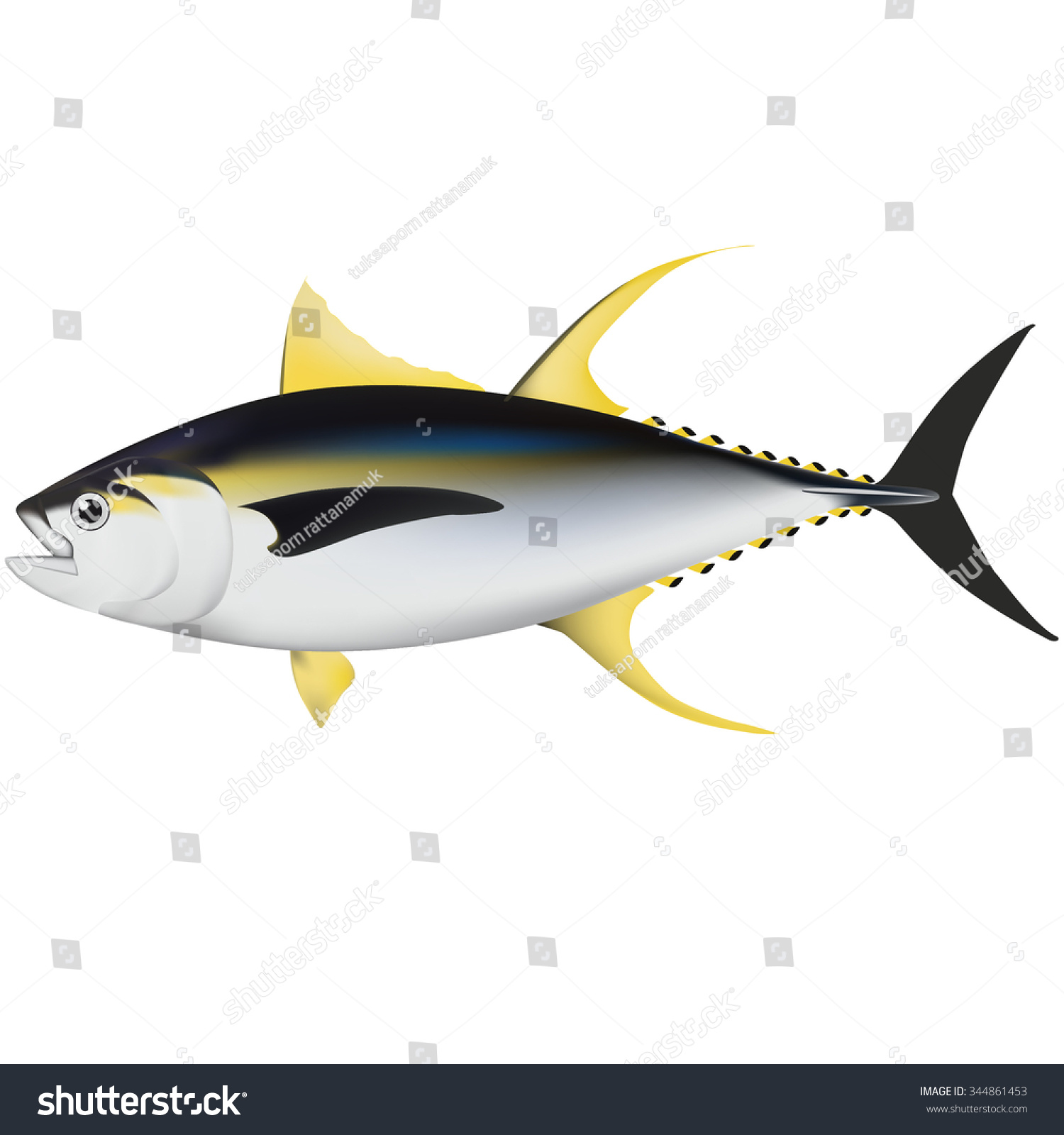 Tuna Marine Fish Illustrator Stock Vector 344861453 - Shutterstock