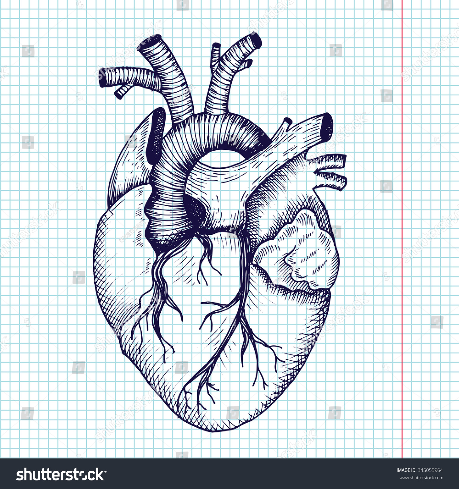 Anatomical Heart Vector Vintage Style Detailed Stock Vector