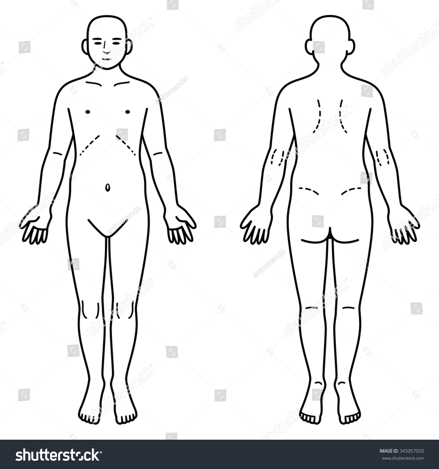 Human Body Front Back Stock Vector Royalty Free 345057020