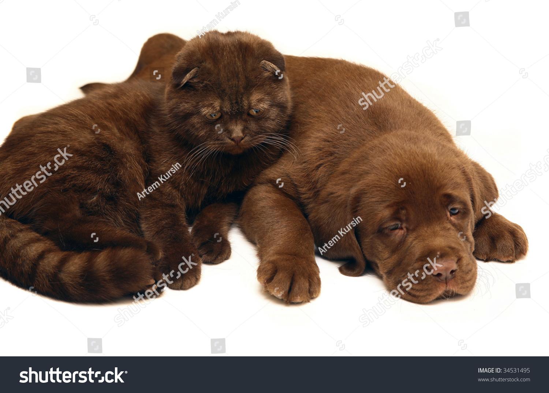 Chocolate Cat Chocolate Dog Stock Photo 34531495 - Shutterstock