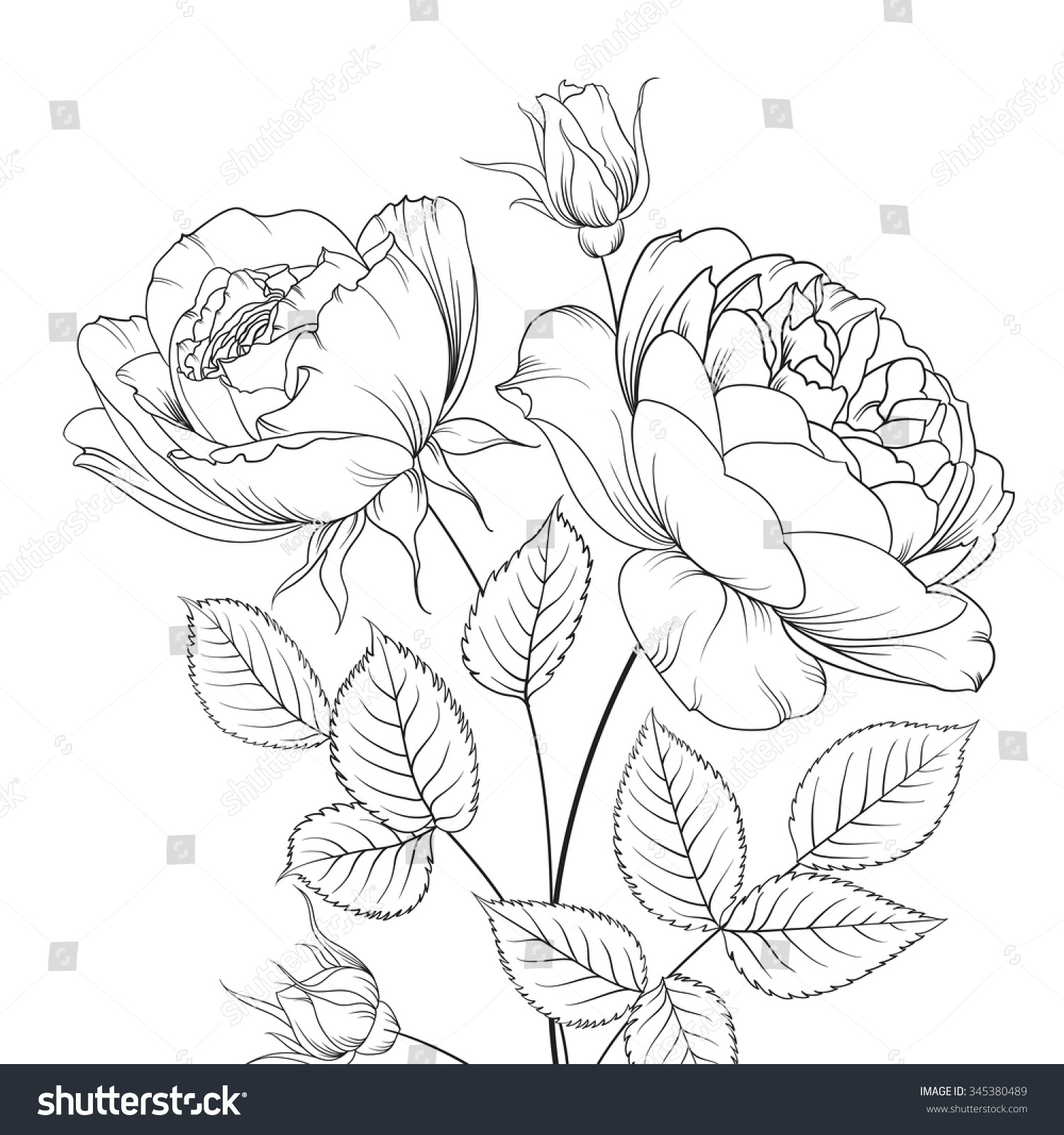 Group Of Rose Flowers Floral Background With Blooming Isolated On White Vector