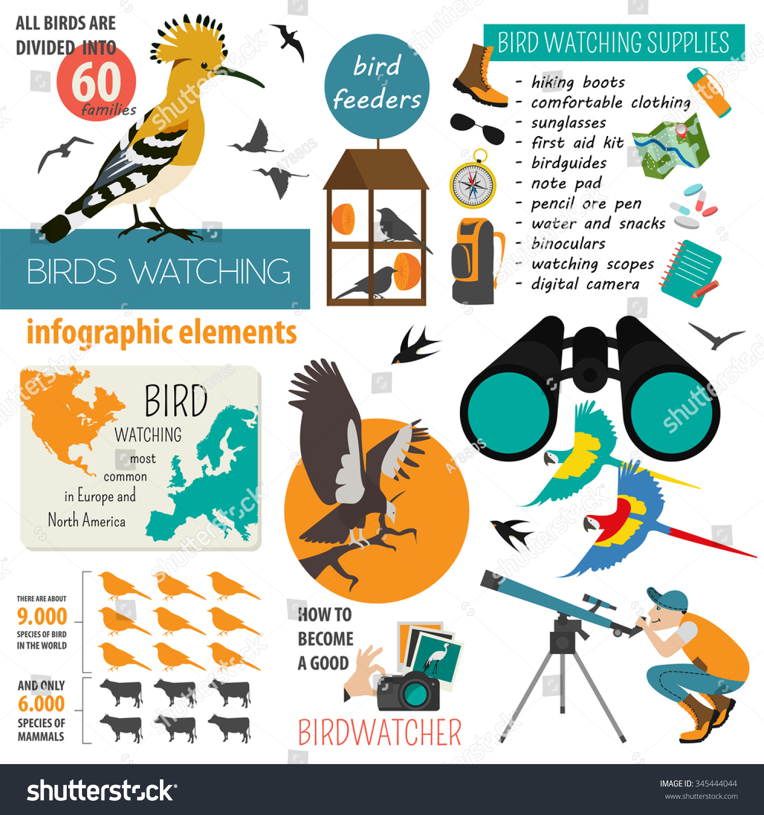 bird watching infographic template vector illustration stock