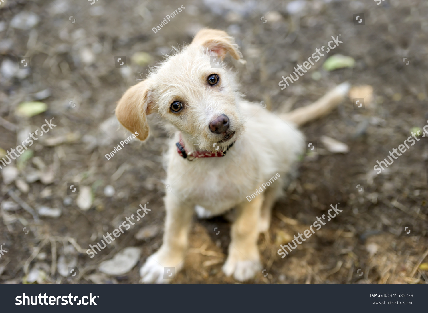 Cute Dog Adorable Puppy Dog Big Stock Photo Edit Now 345585233