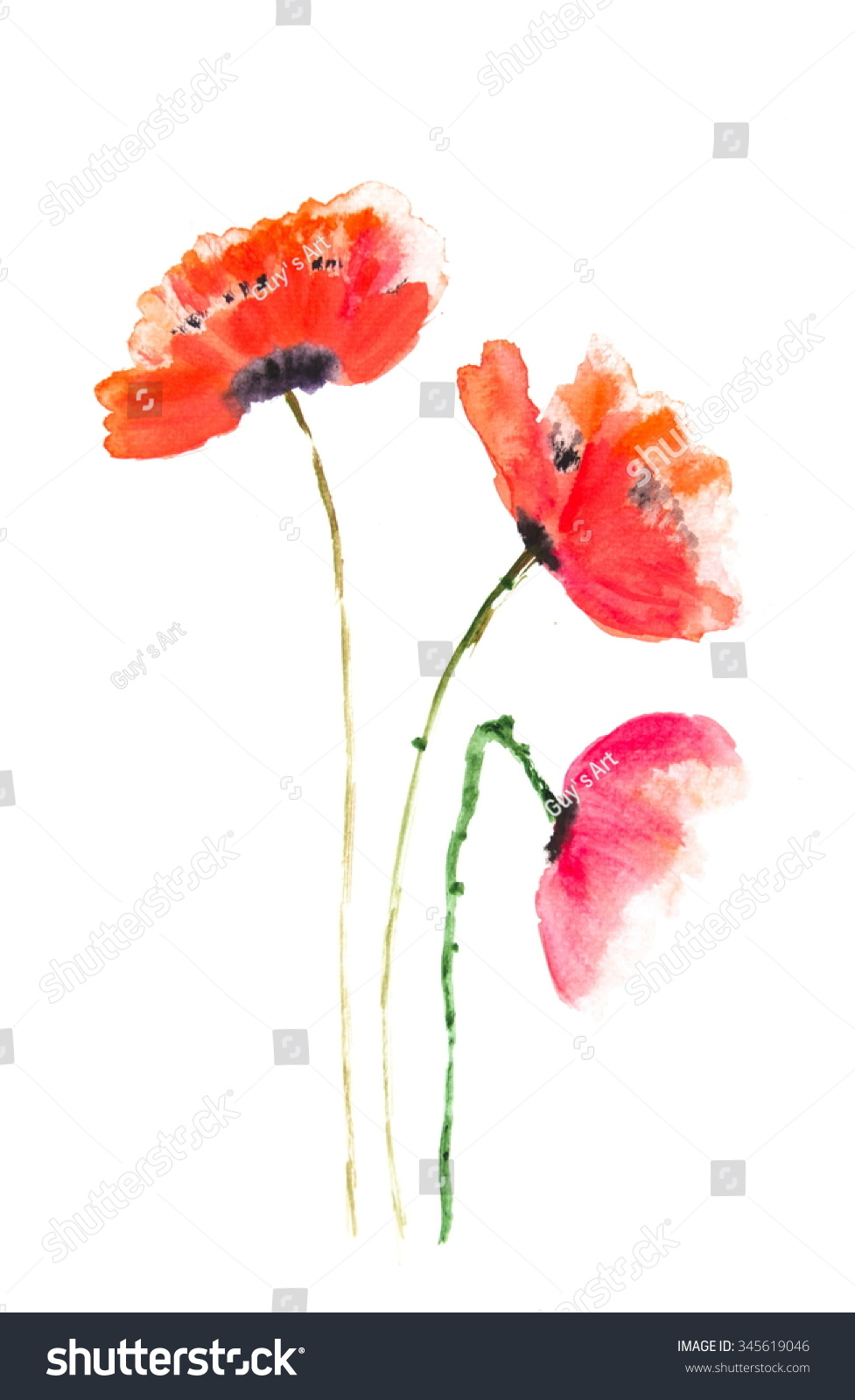 Red Poppy Flowers Acrylic Color Painting Ez Canvas