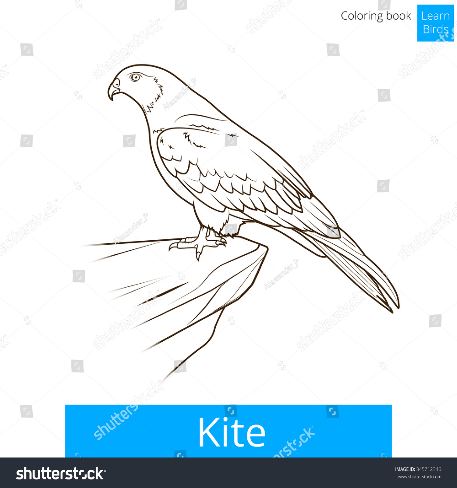 Kite Bird Learn Birds Educational Game Coloring Book Vector Illustration