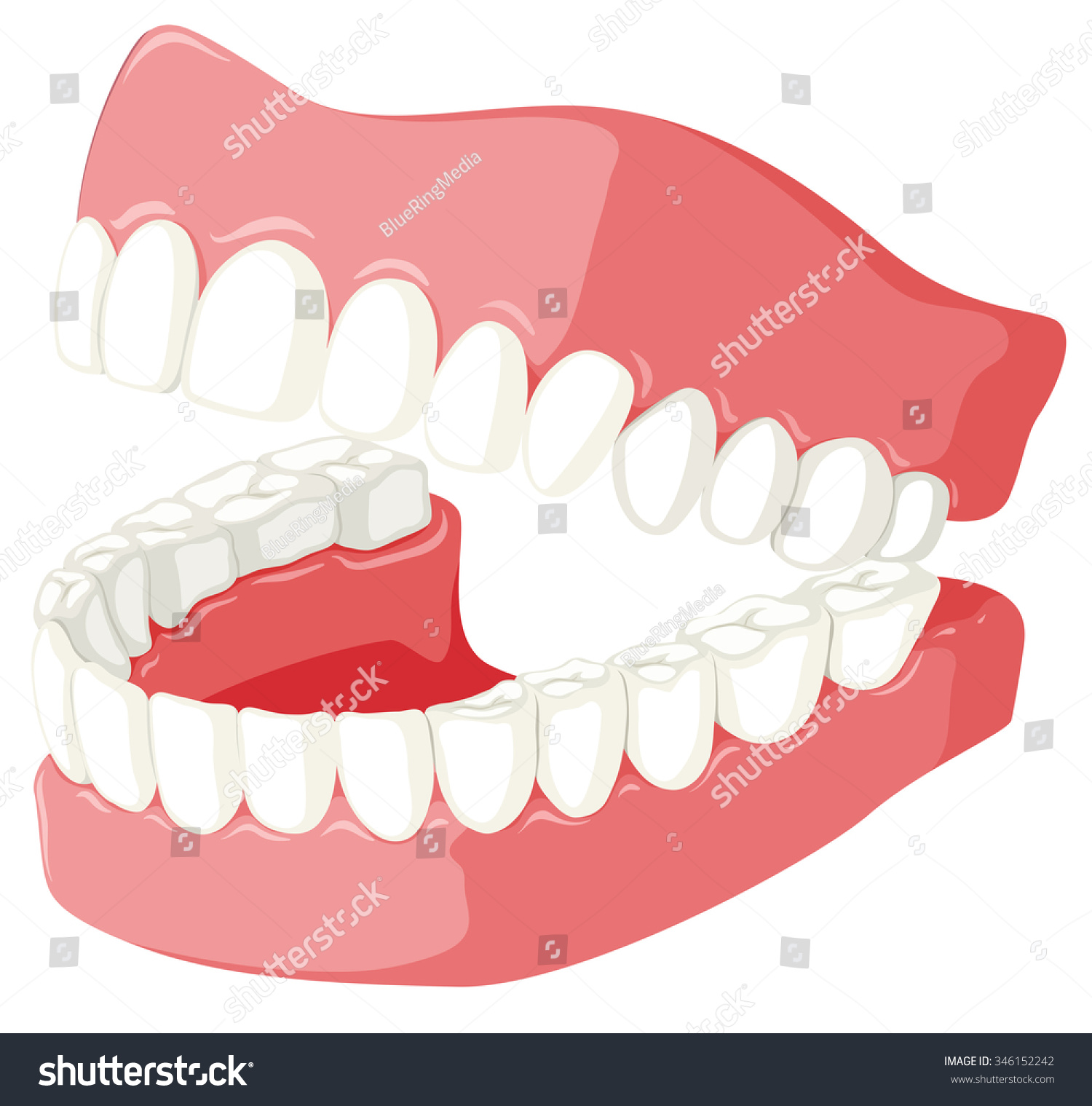 346152242 likewise Hr108 further 36000 together with Top 65 Cattle Clipart as well Everybody Up Starter Unit 8 Flash Cards. on cartoon mouth clipart