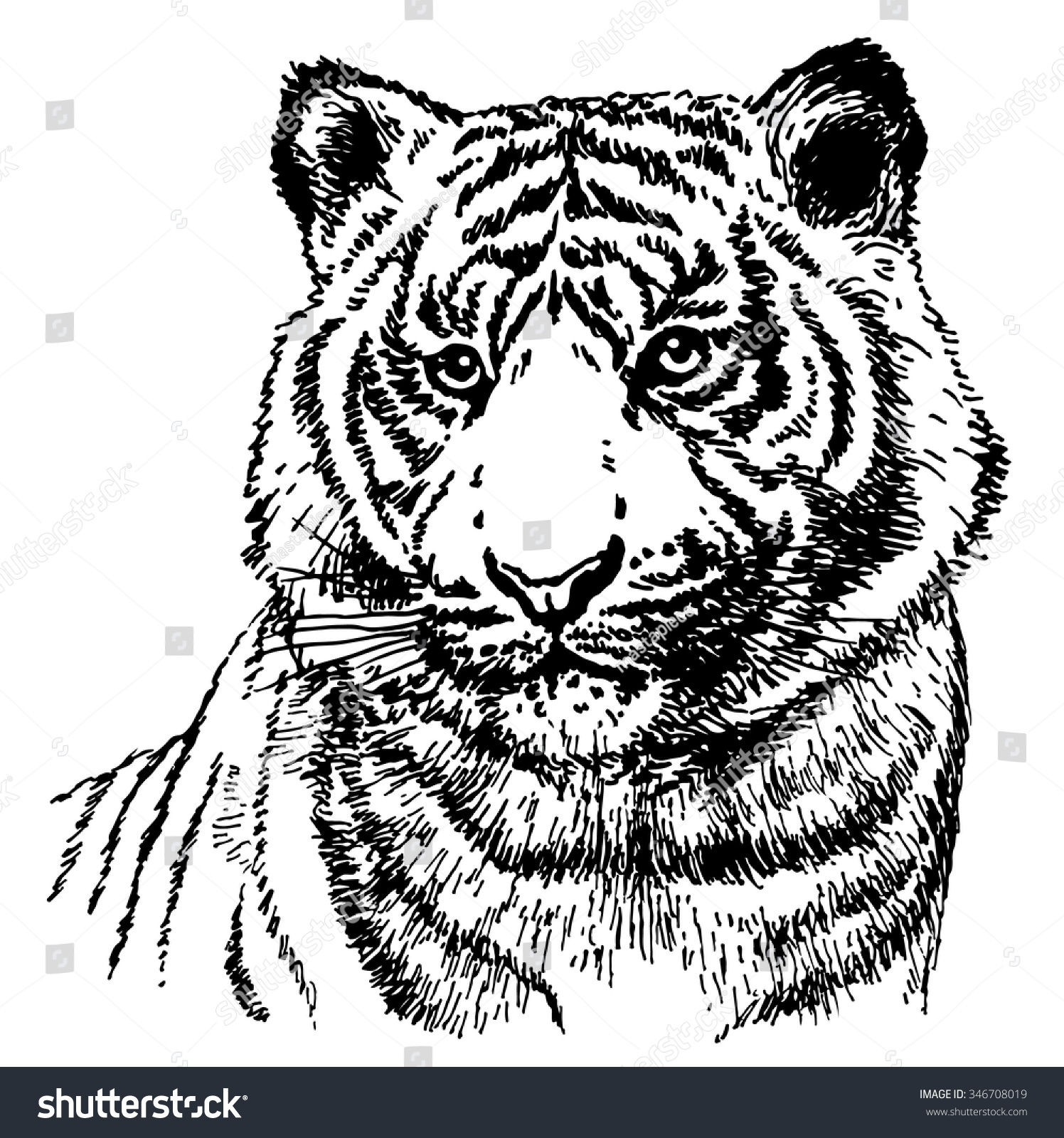 malayan tiger drawing - photo #14
