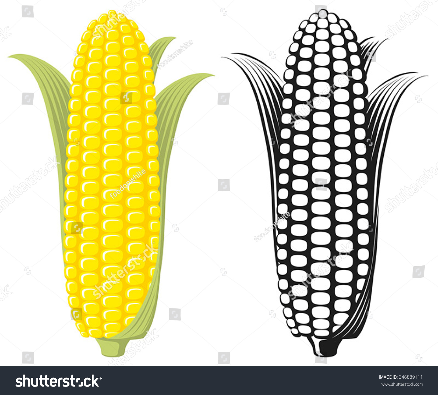 Corn On The Cob / Sweetcorn With Leaves, Flat Graphic ...