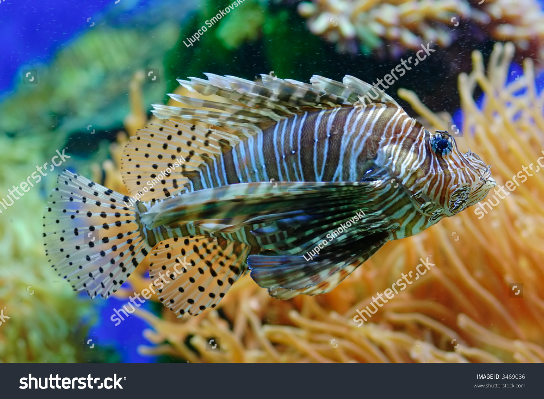 how to separate fish in an aquarium