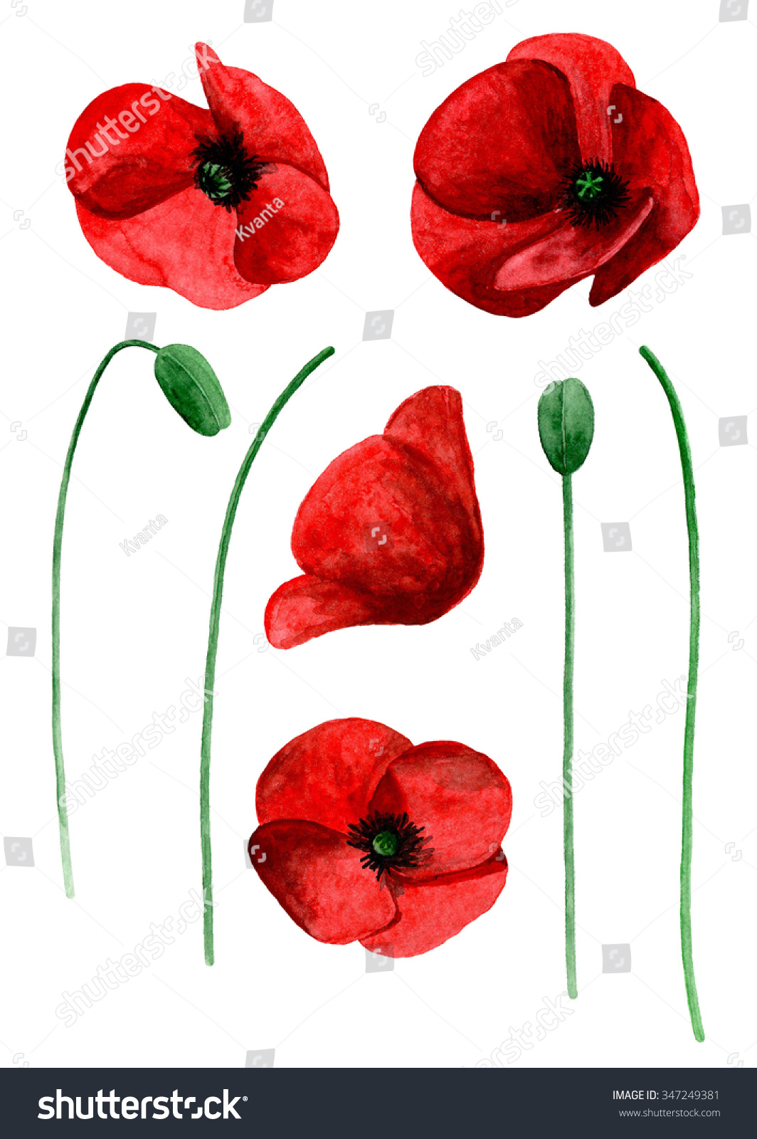Royalty Free Stock Illustration Of Watercolor Poppy Clip Art Red