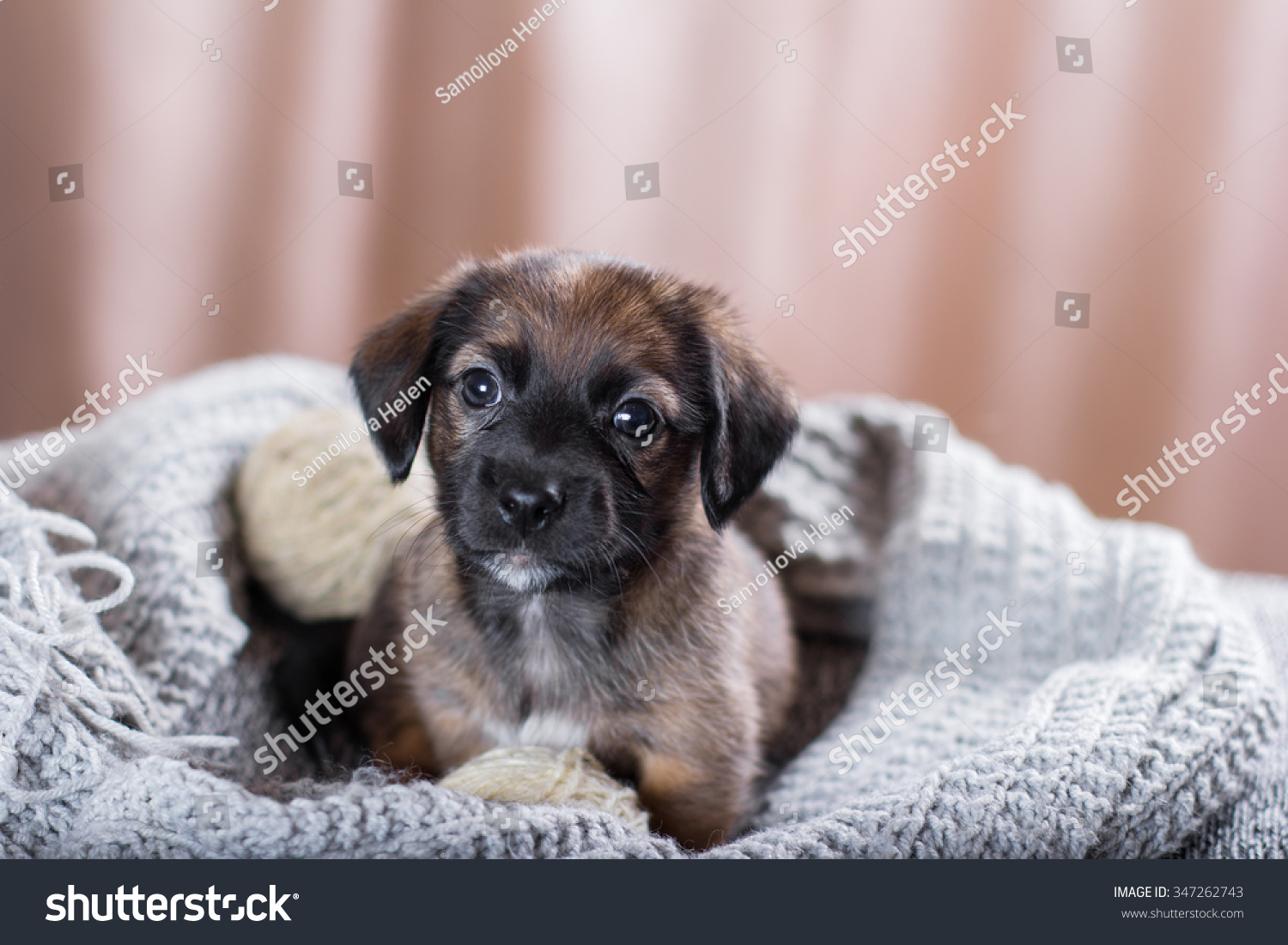 Adorable Puppy Stock Shutterstock