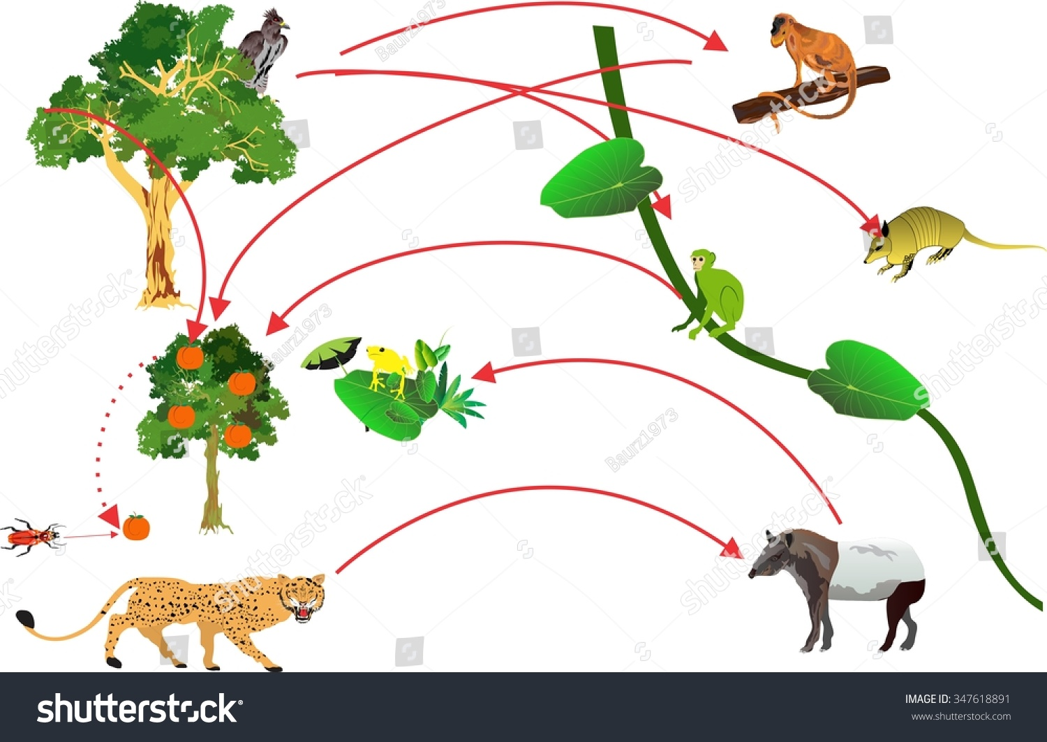 Amazon Rainforest Food Chain Life Crcle Stock Vector 347618891 ...