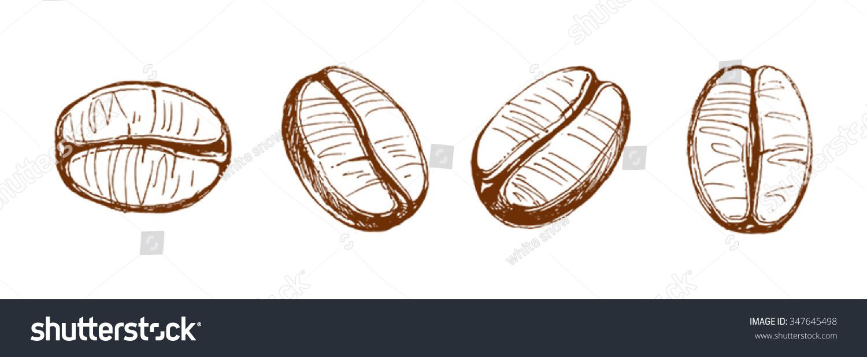 Brown Coffee Bean Sketch
