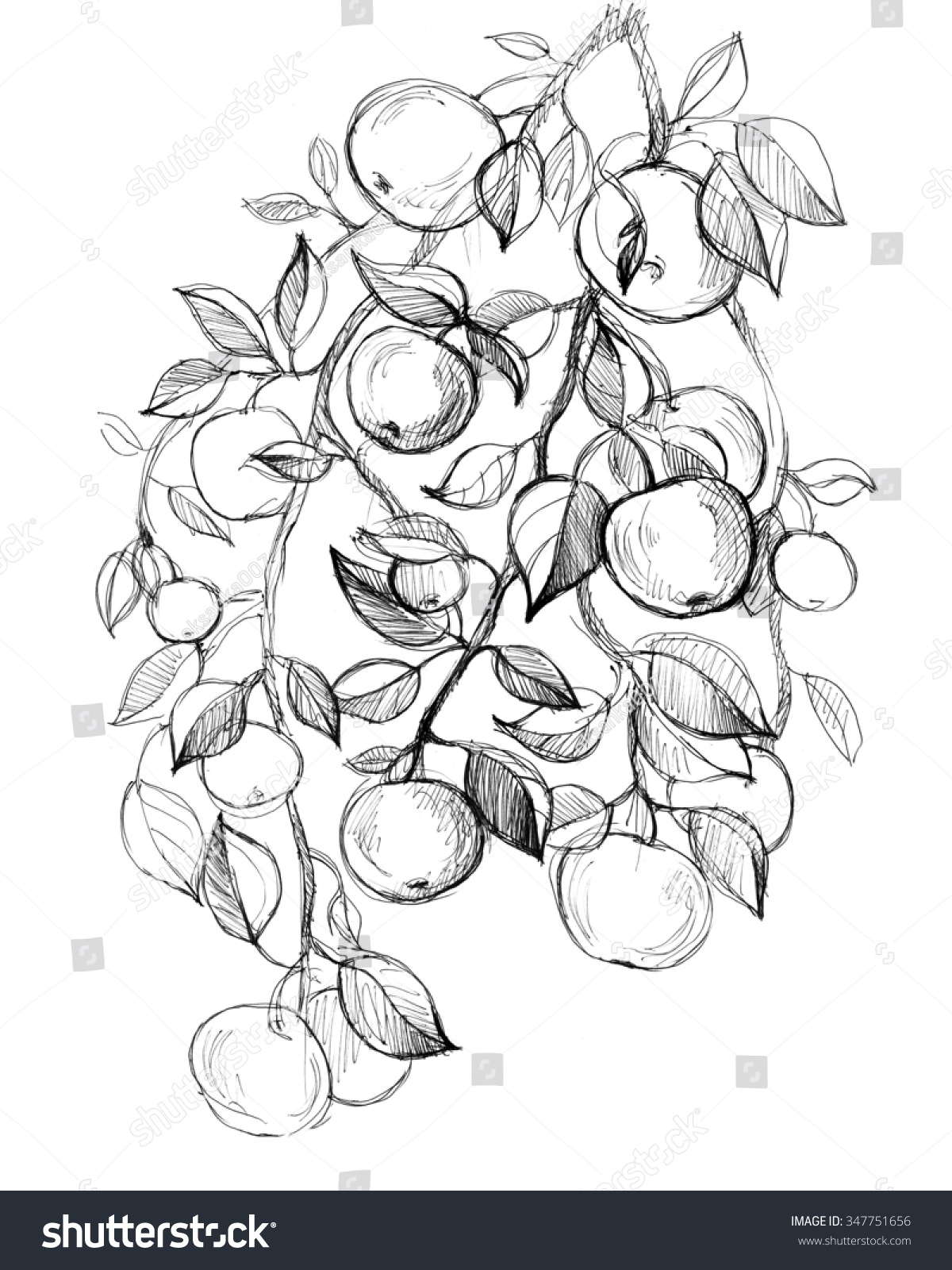 Apple Tree Fruits Leaves Hand Drawn Stock Illustration