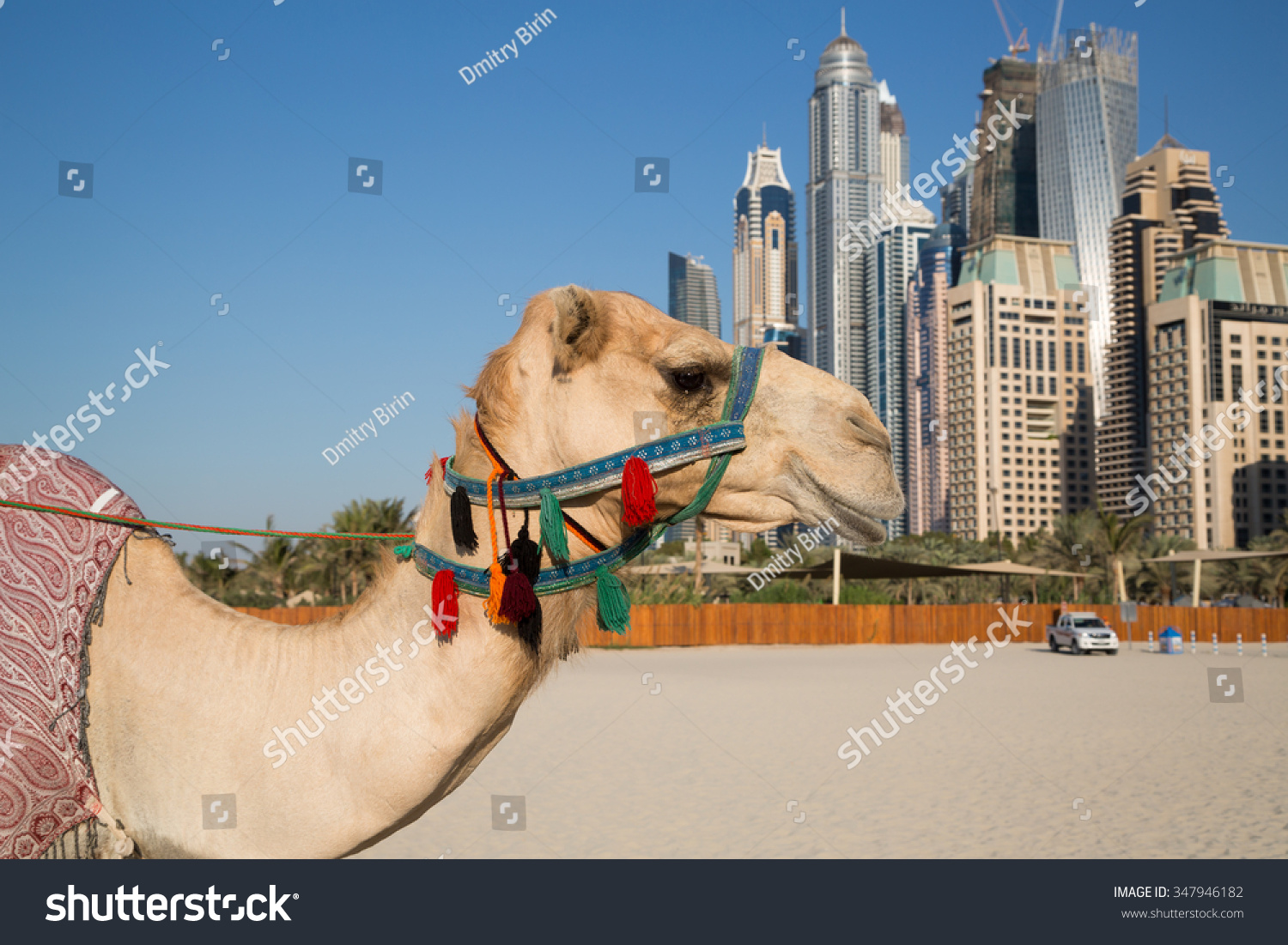 Camel dubai skyscrapers background camel urban stock photo royalty camel dubai skyscrapers background camel urban stock photo royalty free 347946182 shutterstock altavistaventures Choice Image