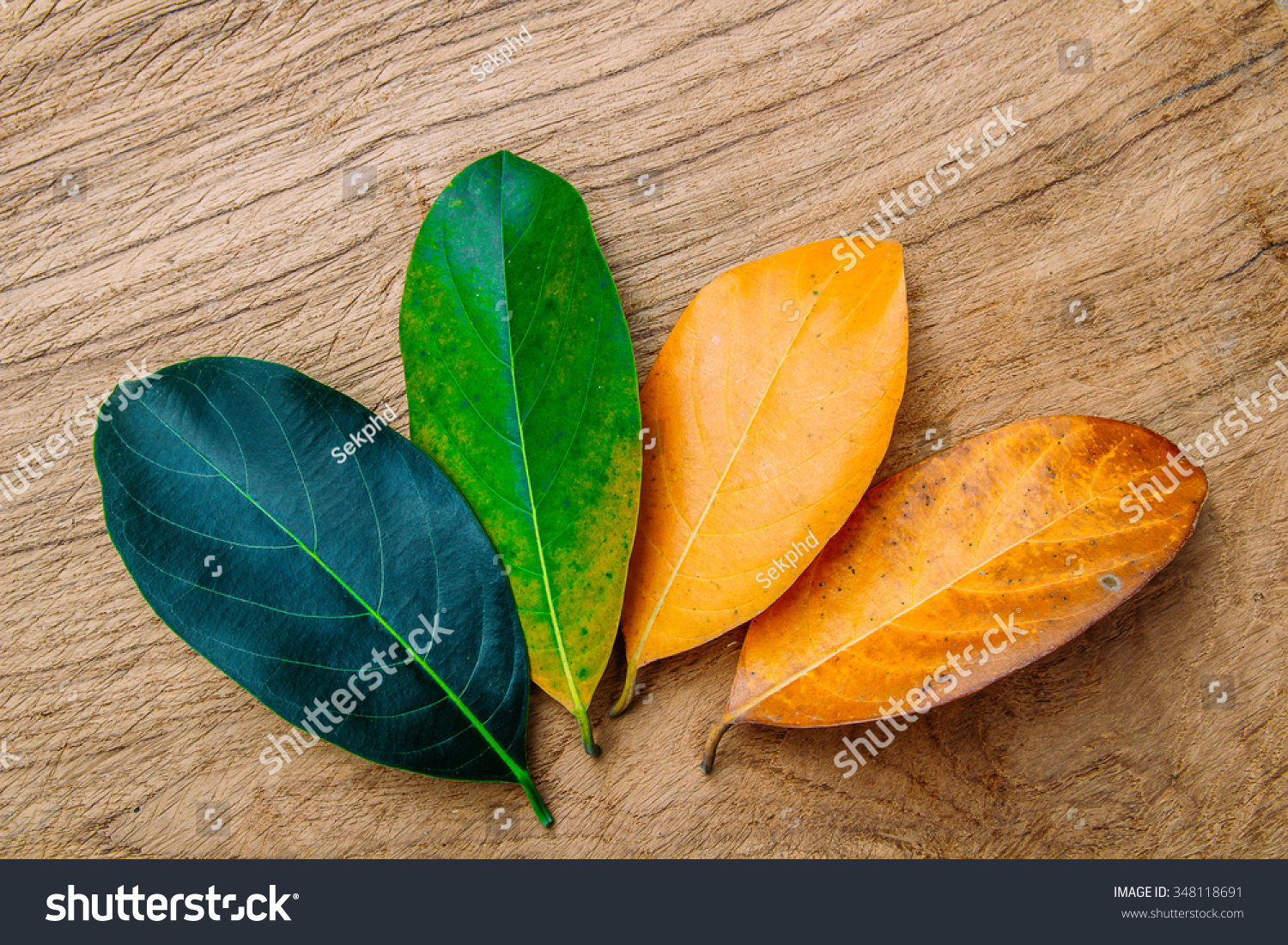 concept season change leaves stock photo 348118691 shutterstock
