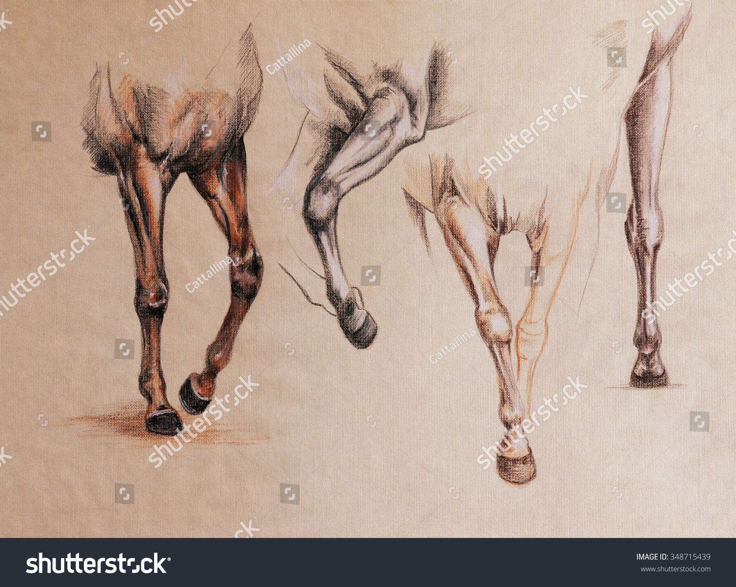 Horse Front Legs Motion Vintage Style Stock Illustration 348715439 ...