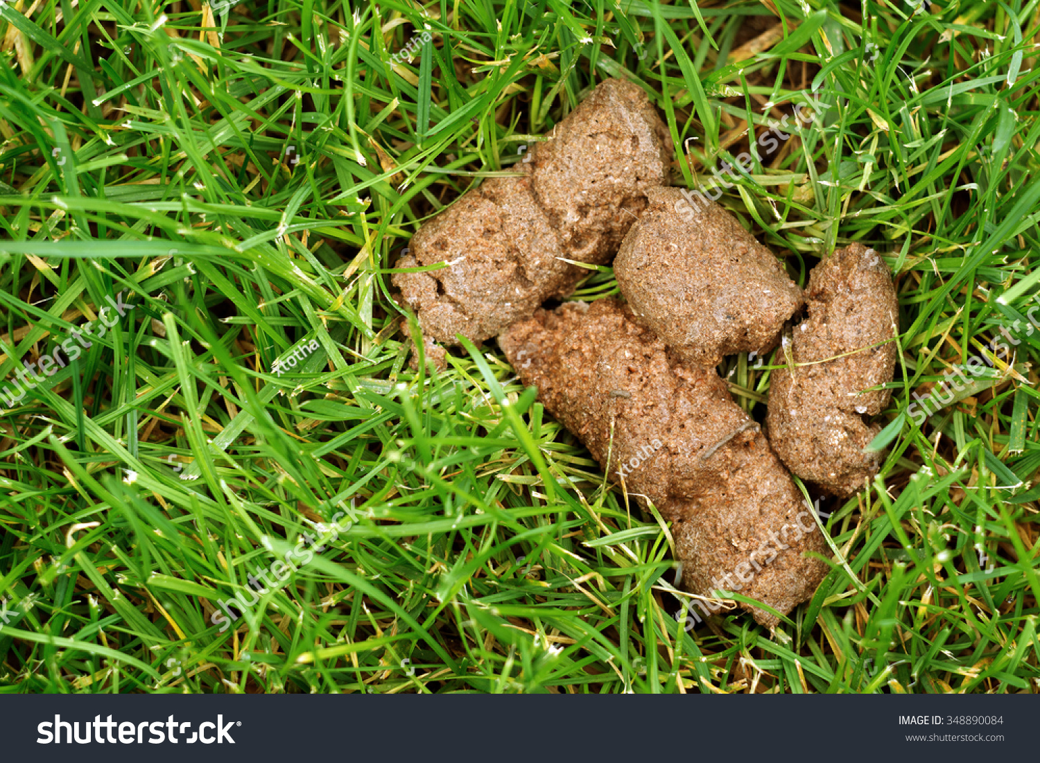 Dog Poop Stock Photo 348890084 - Shutterstock