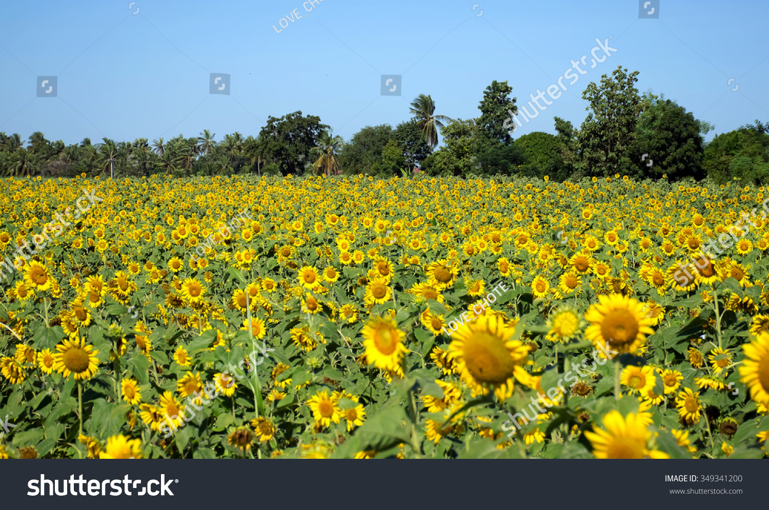 Meadow Flowered Yellow Flowers Ez Canvas