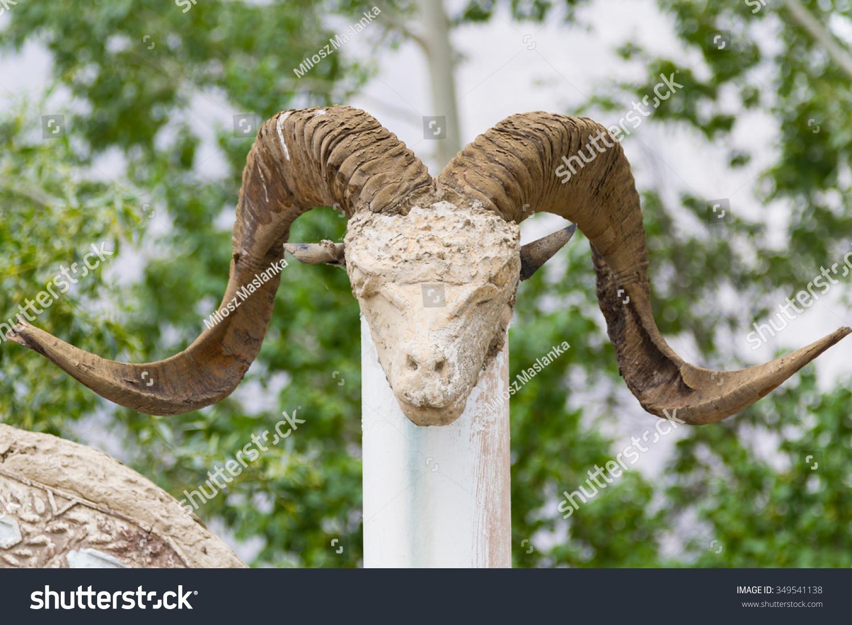Marco Polo Sheep Skull Pamir Tajikistan Stock Photo (Edit Now ...