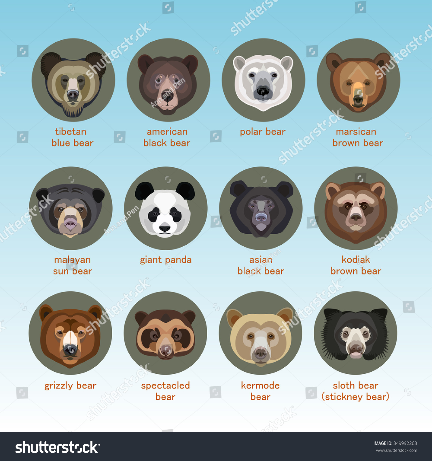 Bear Vector Set Flat Style Breeds Stock Vector 349992263 ...
