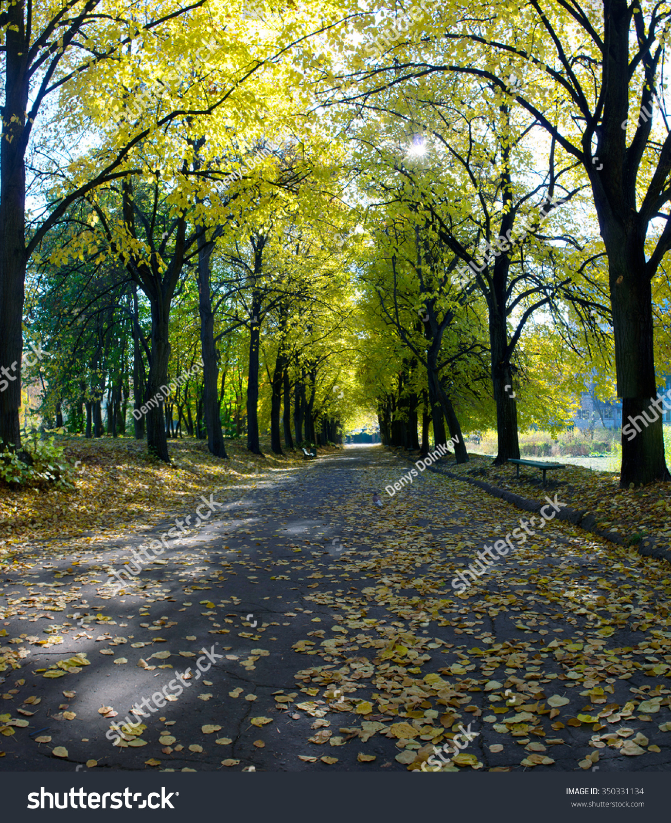 Cycle path lined with trees as leaves fall and cover the track in ...