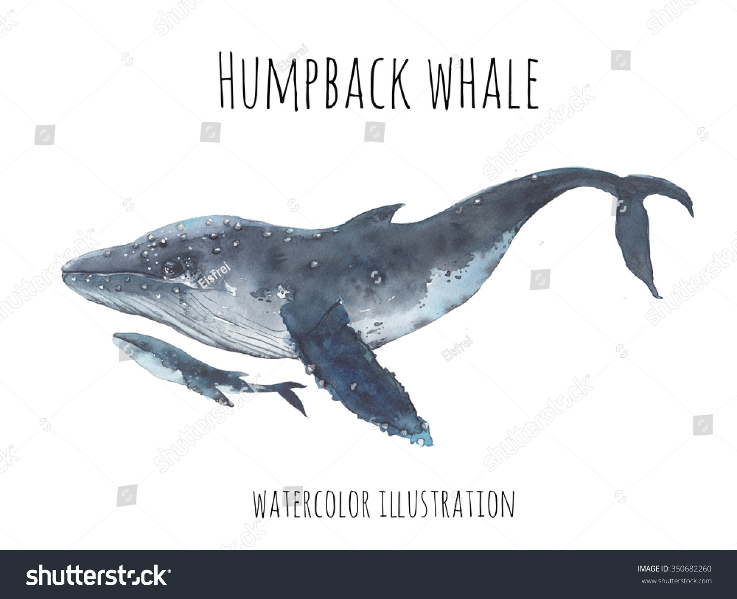 how to draw a baby humpback whale
