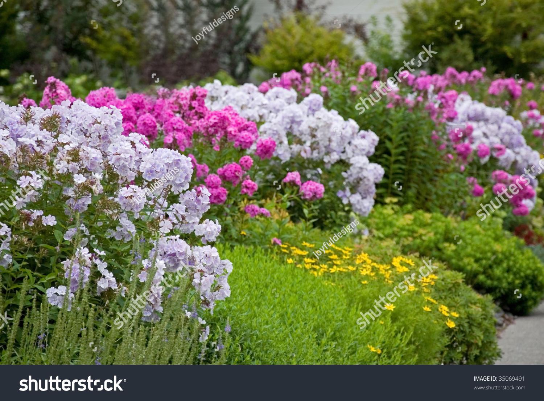 Row Flower Garden : This photo shows row garden flowers stock