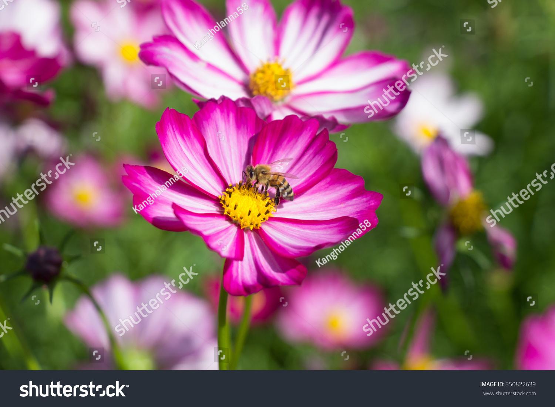 Beautiful colorful winter flowers ez canvas id 350822639 izmirmasajfo