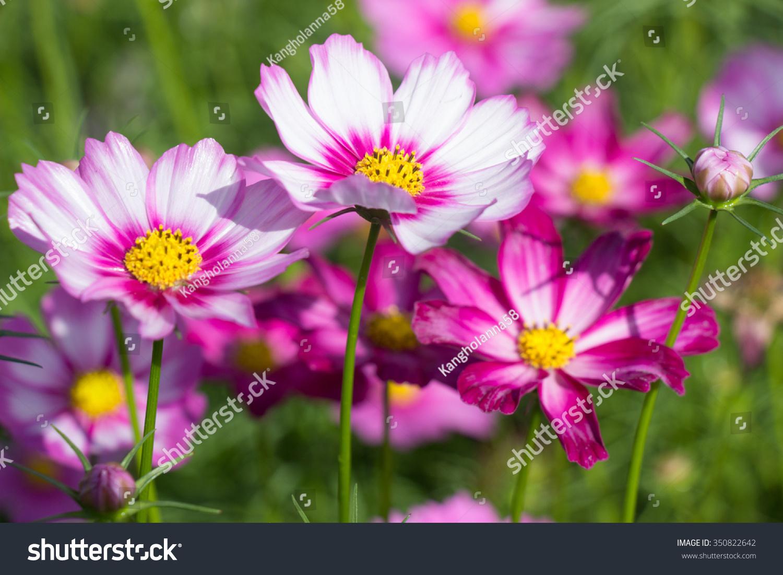 Beautiful colorful winter flowers ez canvas id 350822642 izmirmasajfo