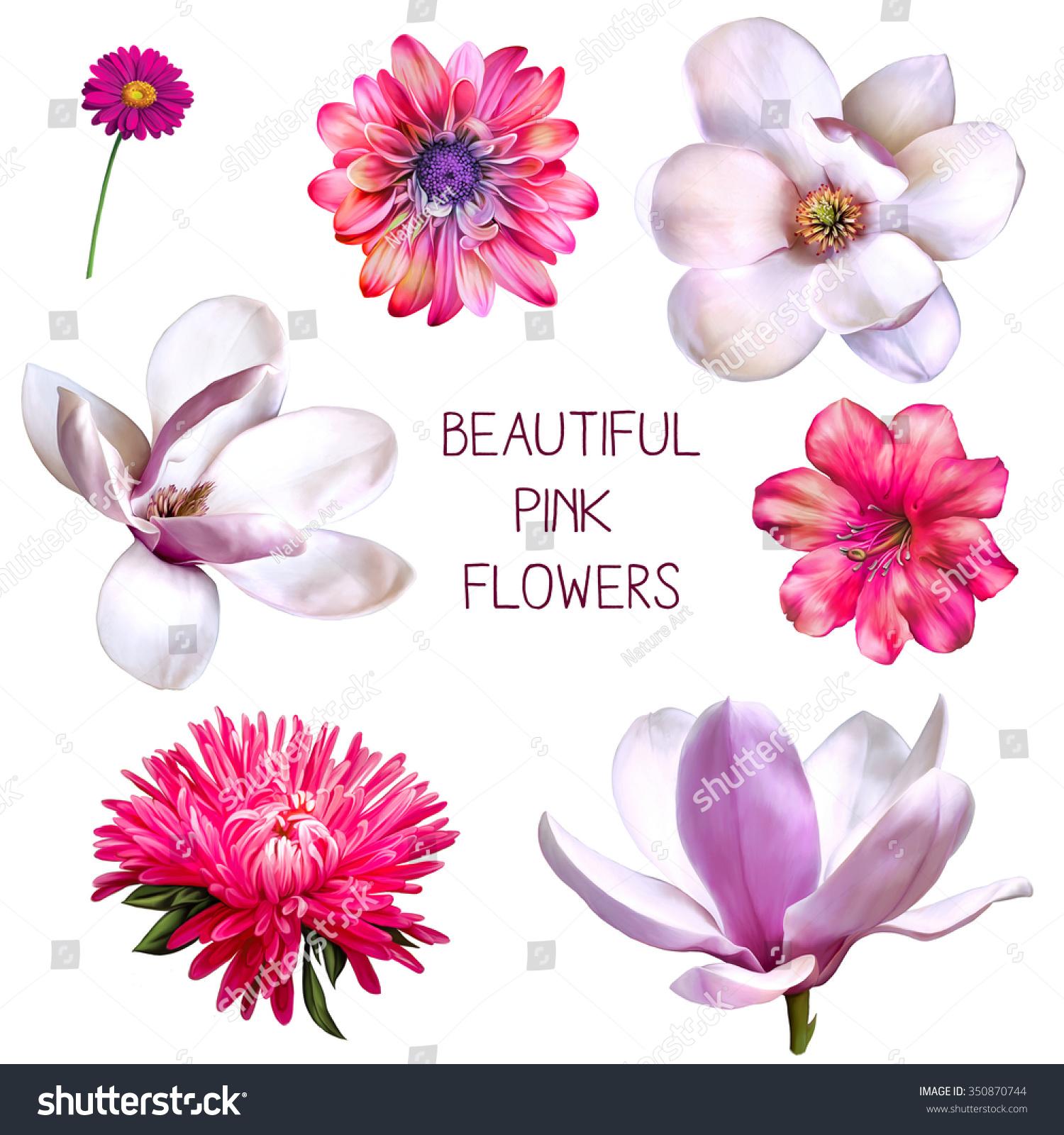 Illustration Beautiful Flowers Set Pink Rose Stock Illustration