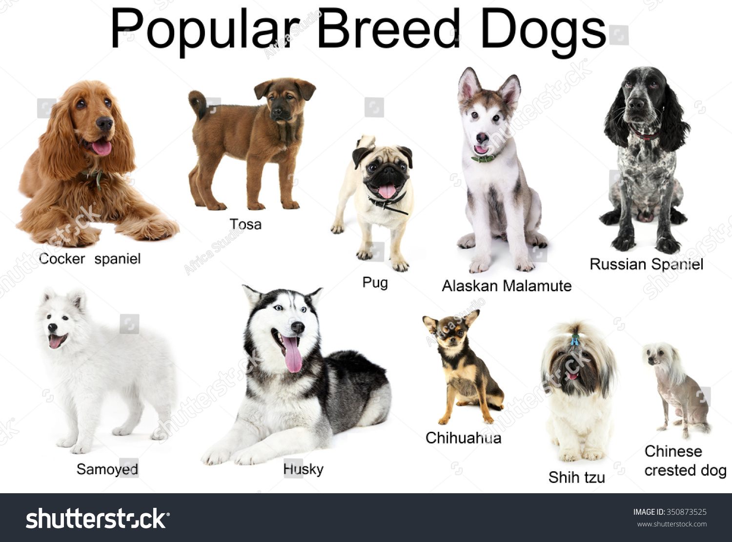 All Small Breeds Of Dogs A Z