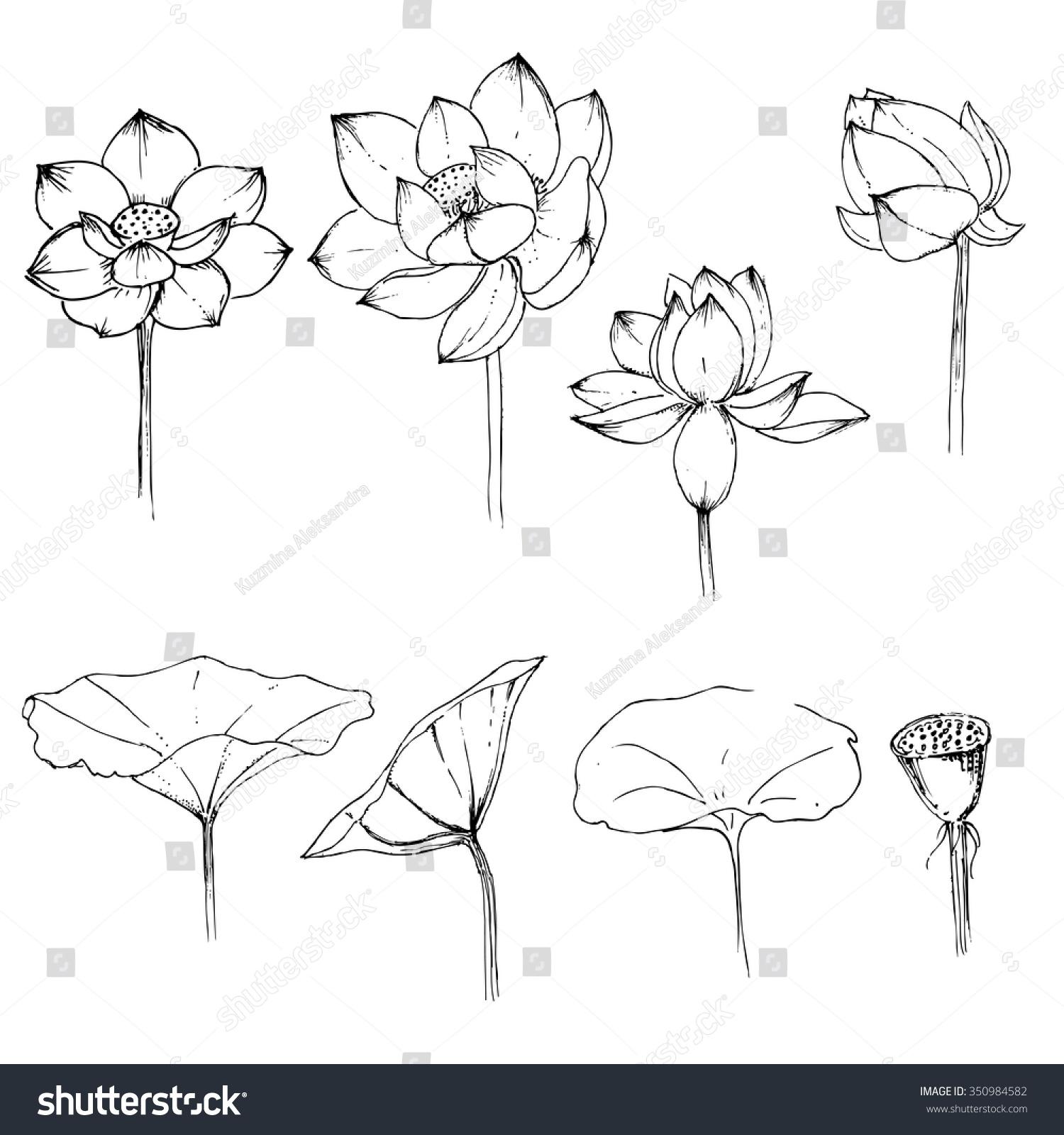 Graphics hand drawn set lotus flowers stock photo photo vector graphics hand drawn set lotus flowers mightylinksfo