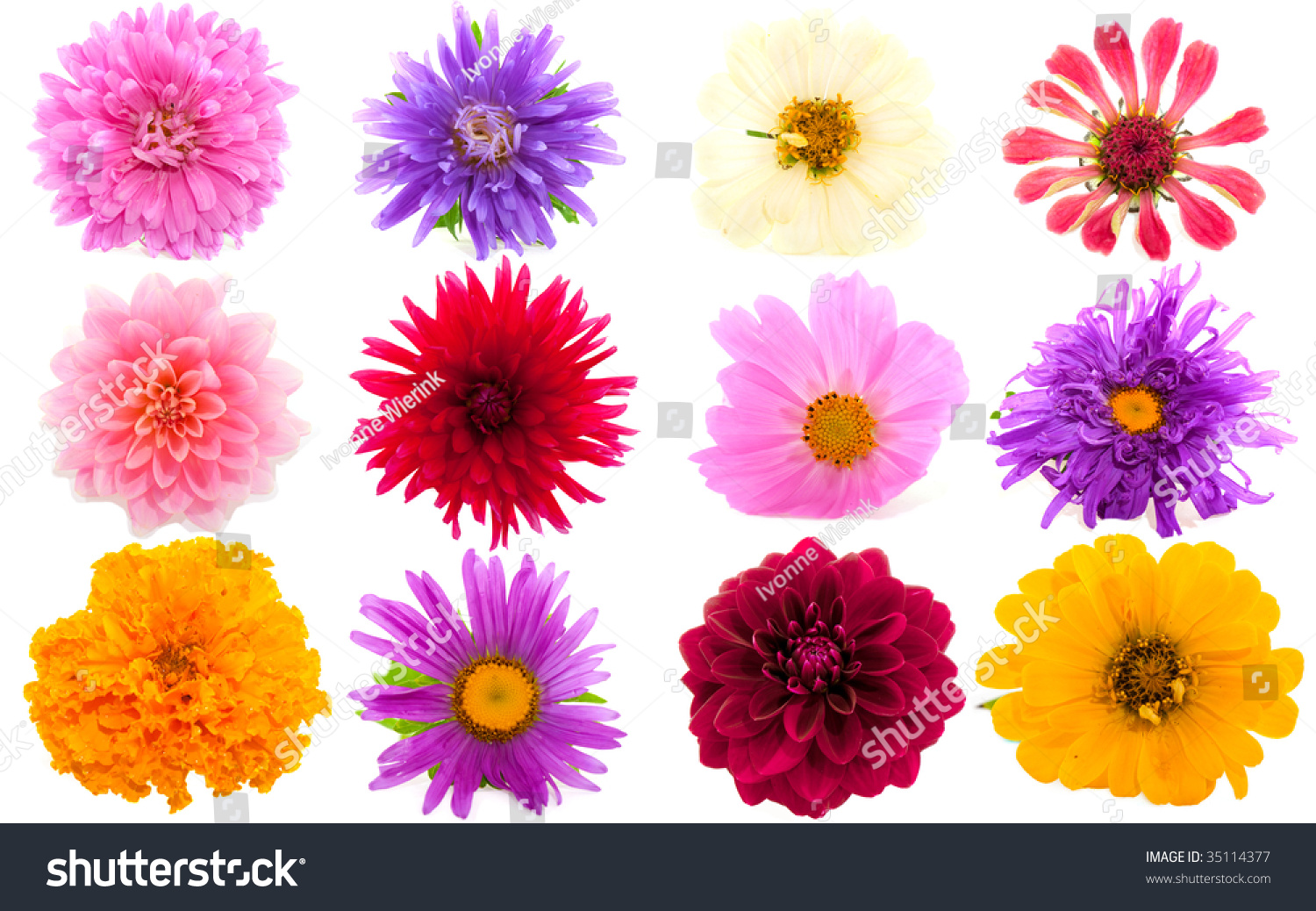 Garden flowers in many different colors isolated over for What makes flowers different colors