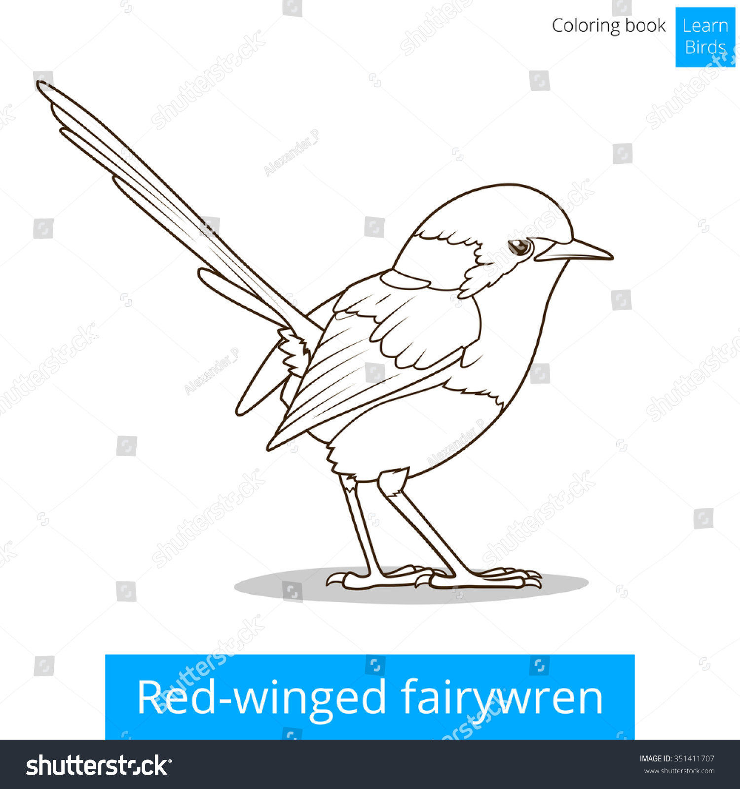 Red Winged Fairywren Bird Learn Birds Educational Game Coloring Book Raster Illustration