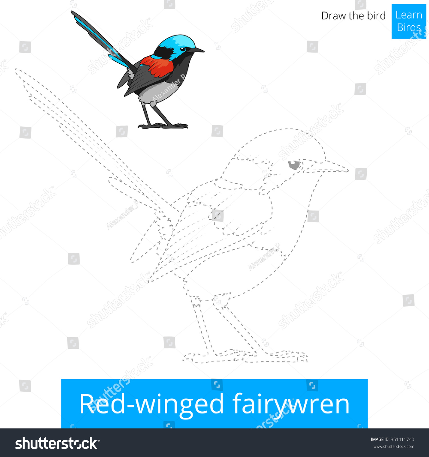 Red Winged Fairywren Learn Birds Educational Game To Draw Raster Illustration