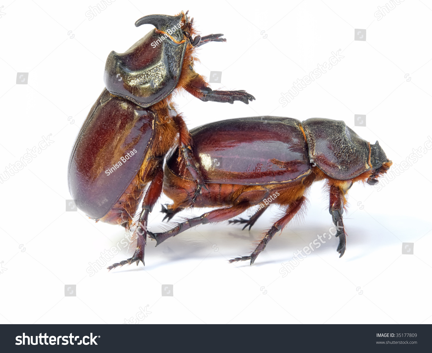 Insect Sex Pics 102