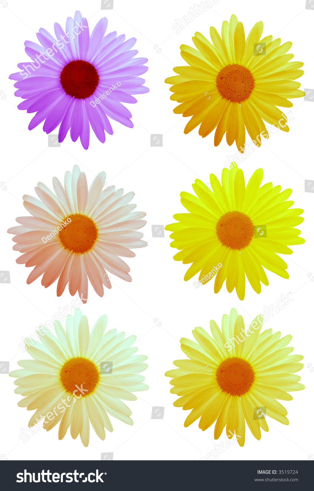 Colorful daisy flowers your designs on stock photo edit now colorful daisy flowers for your designs on white 3 izmirmasajfo