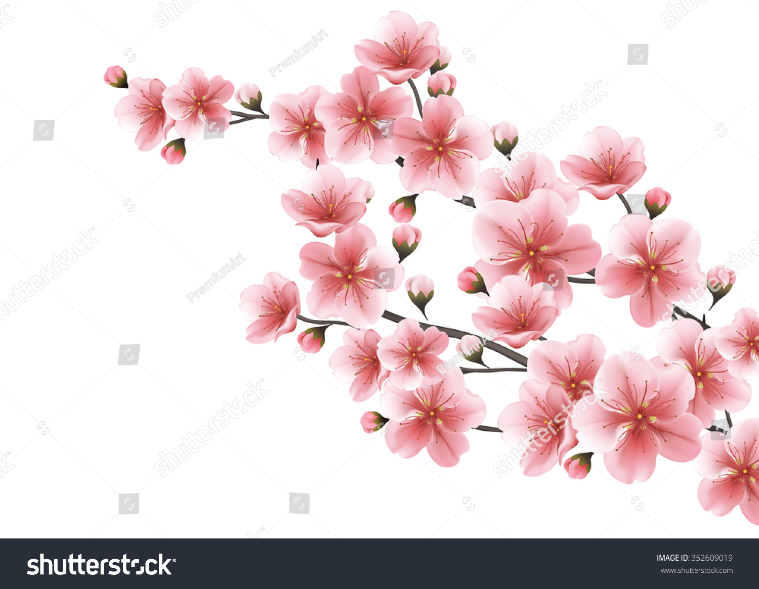 Nature background blossom branch pink sakura stock vector nature background with blossom branch of pink sakura flowers vector template isolated on white background dhlflorist Images