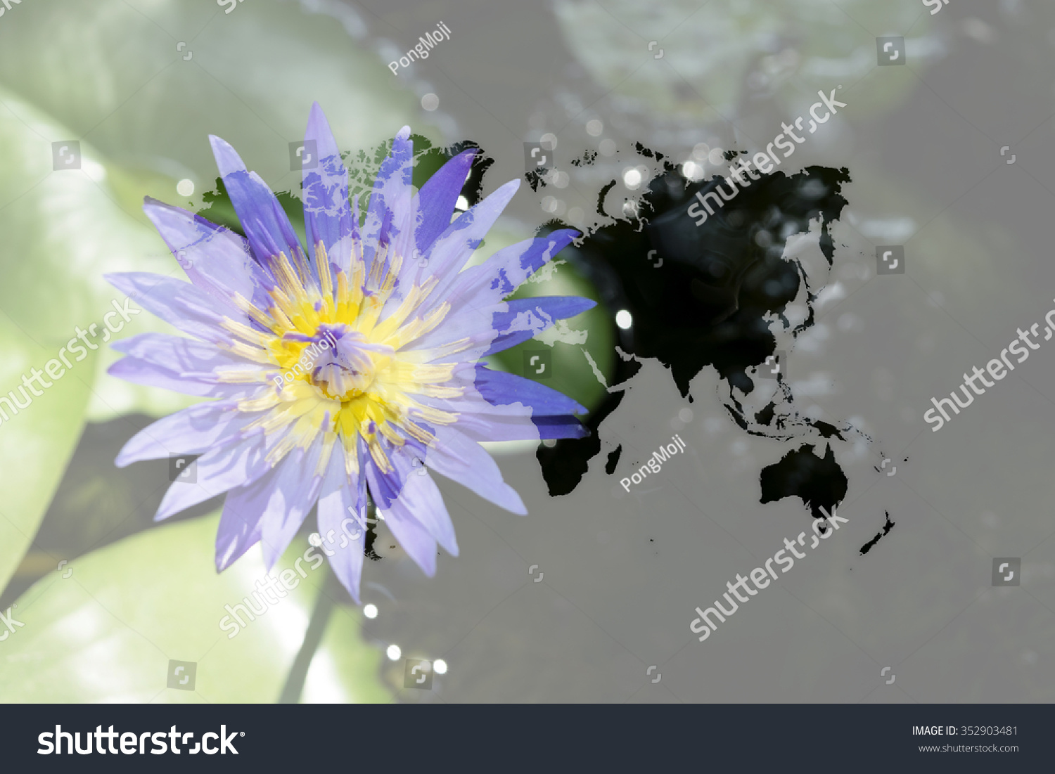 Beautiful lotus flower naturally beautiful flowers stock photo beautiful lotus flower naturally beautiful flowers in the garden with world map outline elements izmirmasajfo