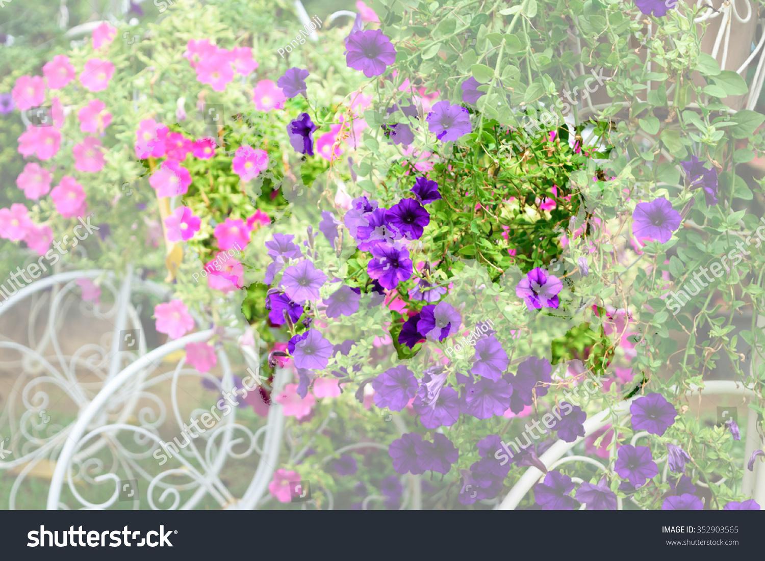 Beautiful flower naturally beautiful flowers garden stock photo beautiful flower naturally beautiful flowers in the garden with world map outline elements of izmirmasajfo