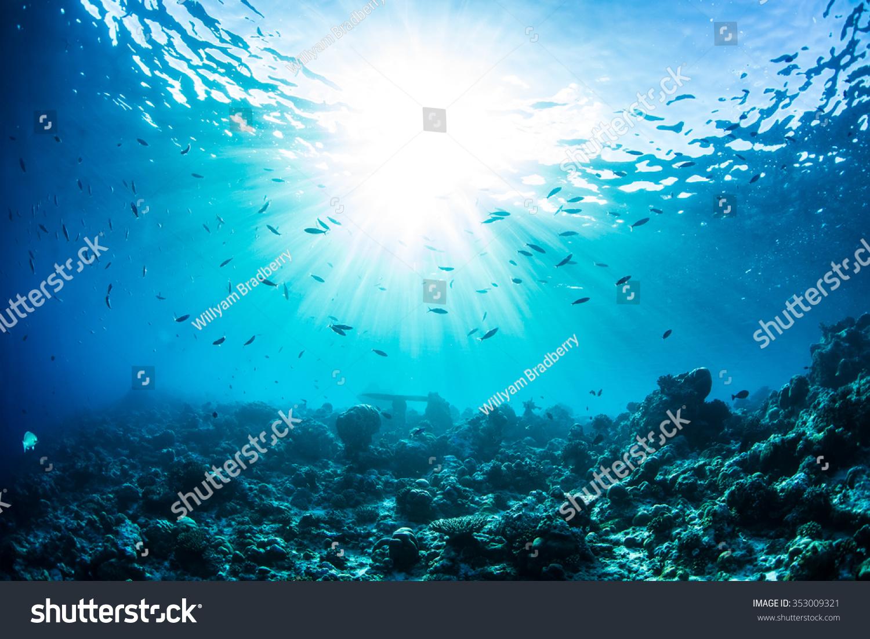 Ocean Underwater Reef Sun Light Through Stock Photo