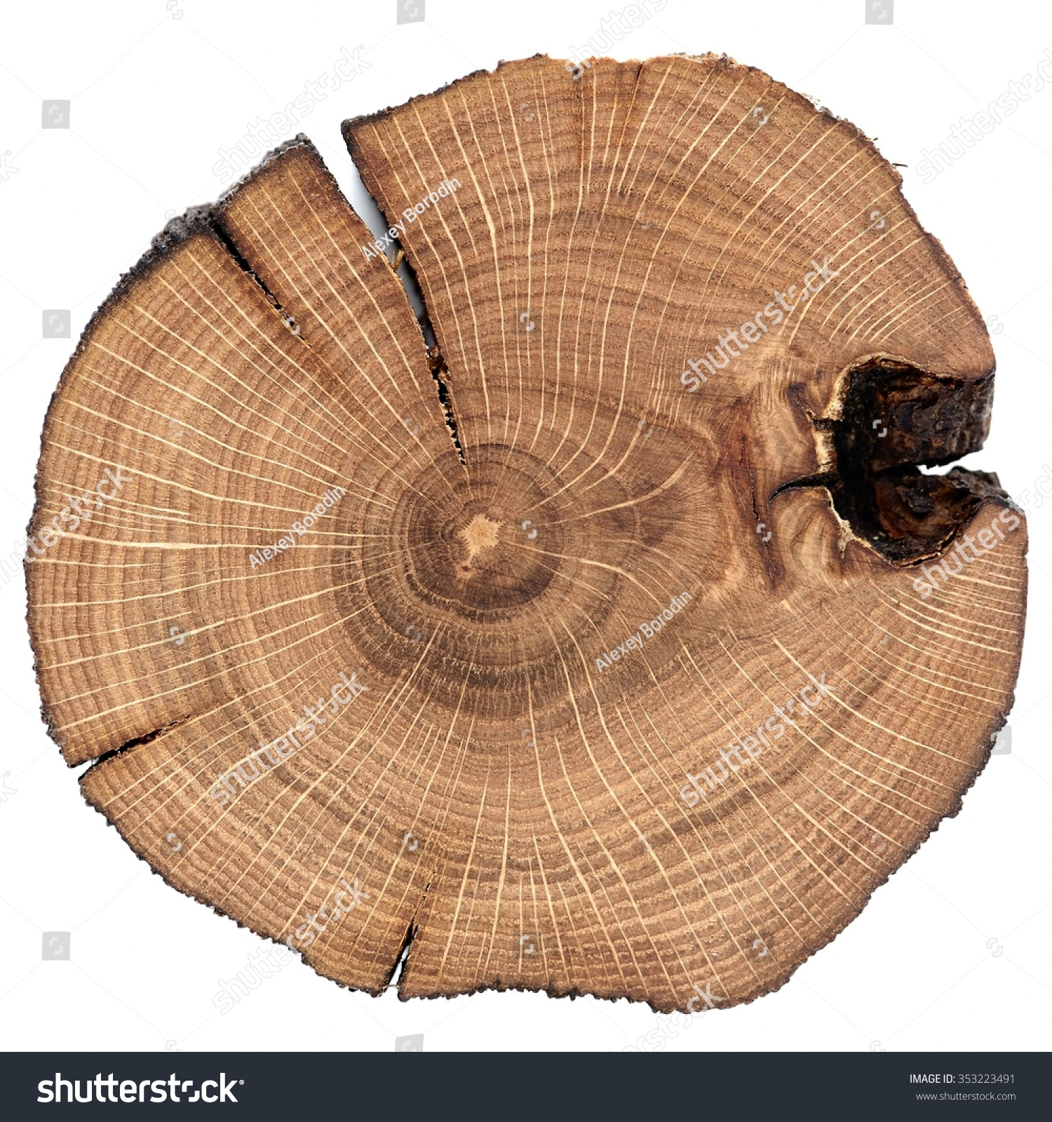 Stock Photo Cracked Oak