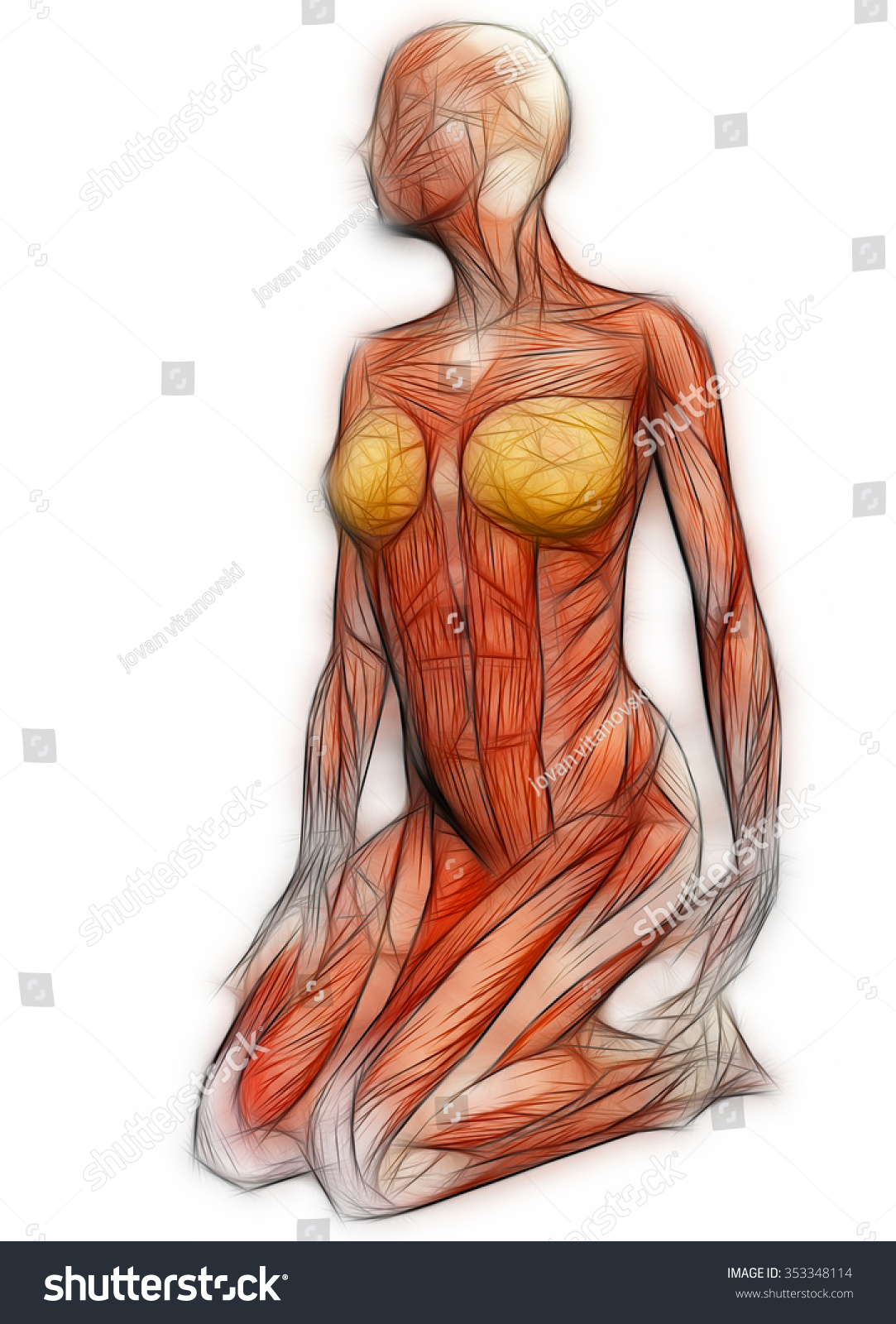Human Anatomy Female Muscles Made 3 D Stock Illustration 353348114