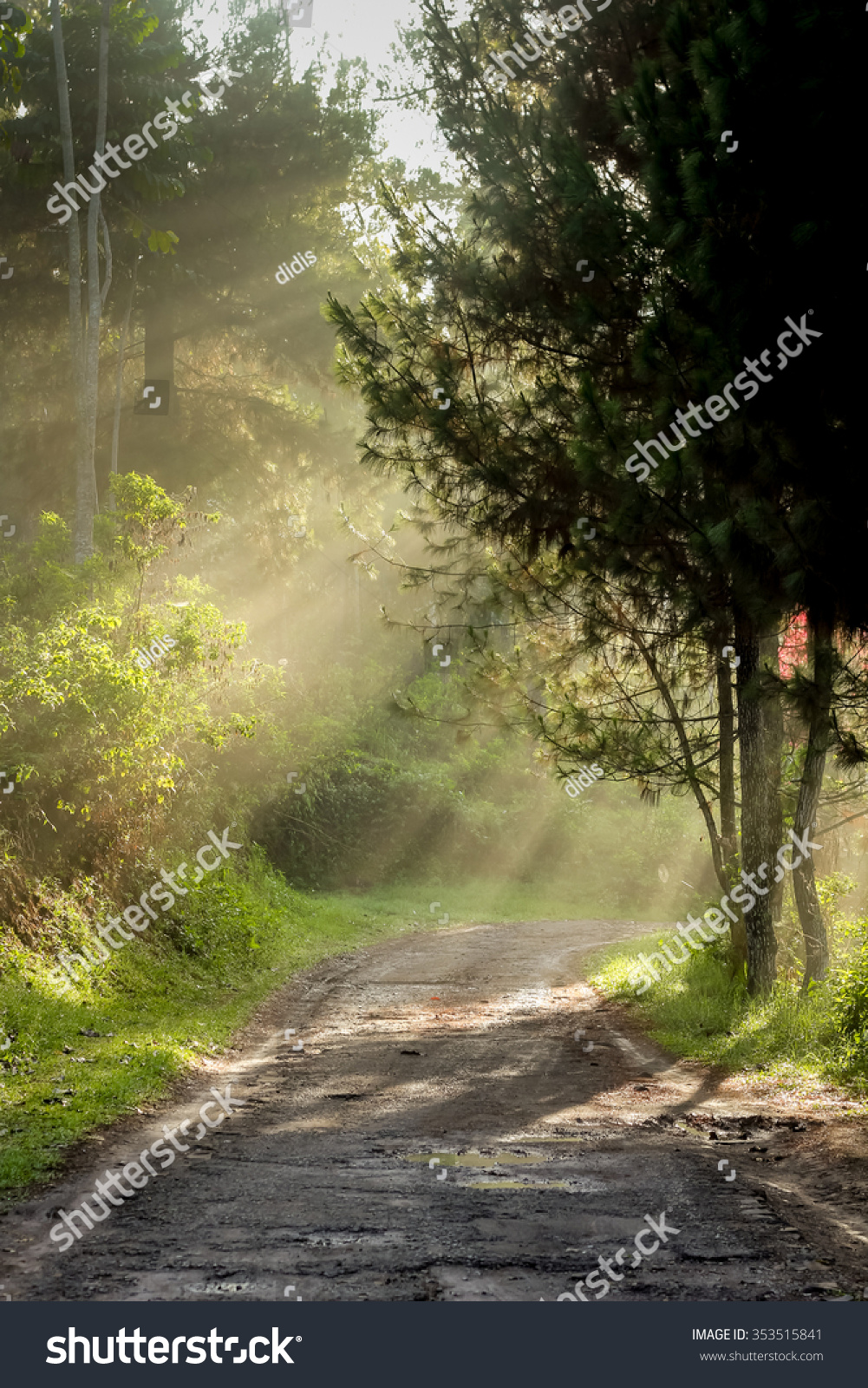 morning scenery rain forest sun casting stock photo (download now
